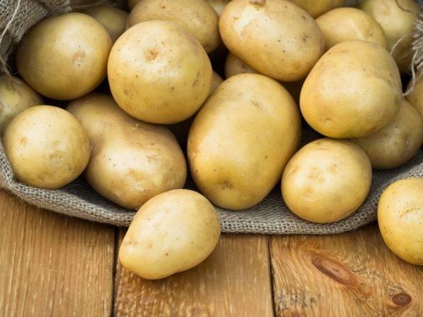 «любава» — лучший сорт картофеля для сибири