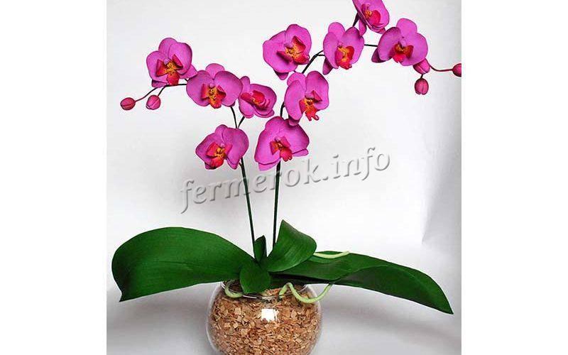 Орхидея: описание, 12 правил ухода, пересадка (фото) +отзывы