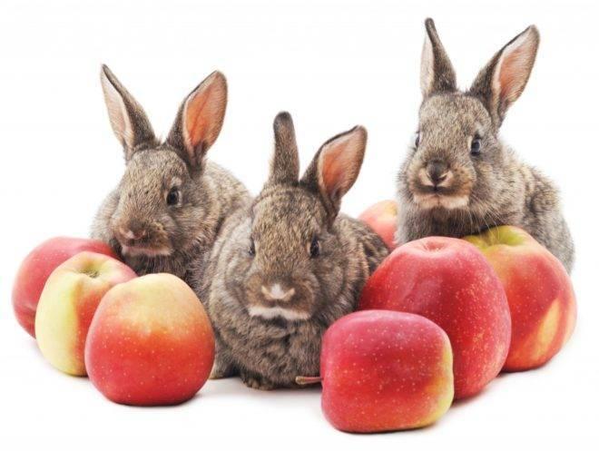 Можно ли декоративным кроликам лопух