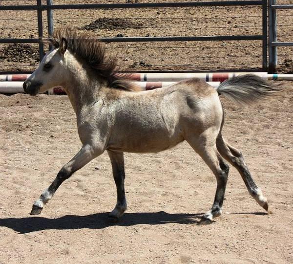 Мини-лошадь: самые маленькие и карликовые кони