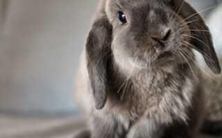 Перечень лекарств для кроликов