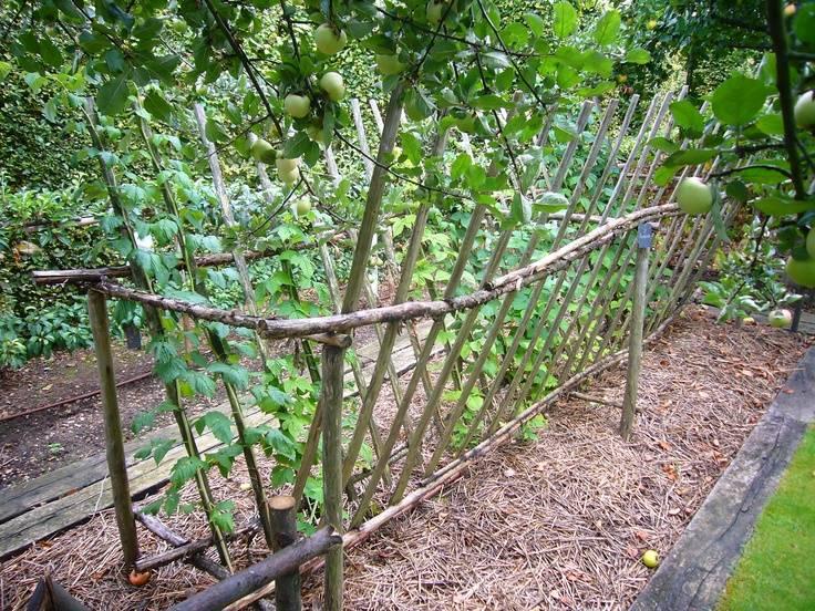 Посадка ремонтантной малины осенью в открытый грунт