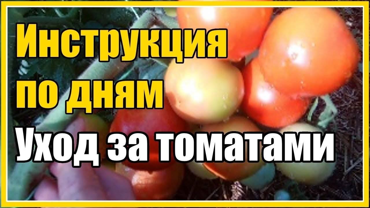 Формирование томатов в теплице и открытом грунте: инструкции и схемы – дачные дела