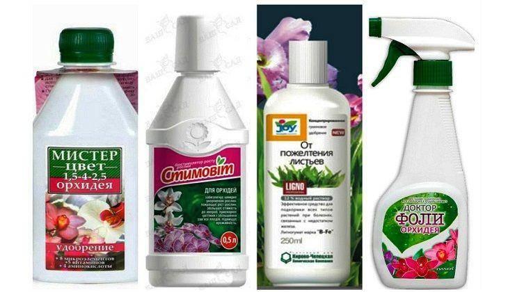 Чем удобрять орхидеи в домашних условиях