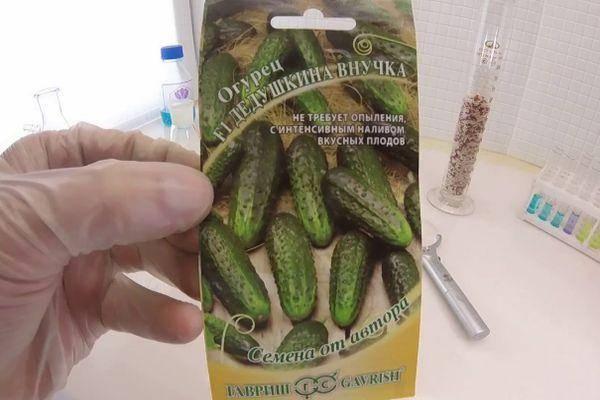 Огурей бабушкин внучок f1: отзывы, описание сорта, посадка и уход, фото семян