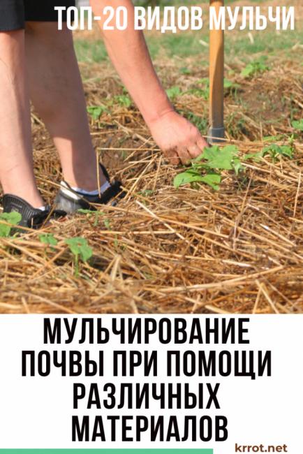 Что такое мульчирование почвы? материалы, способы, видео