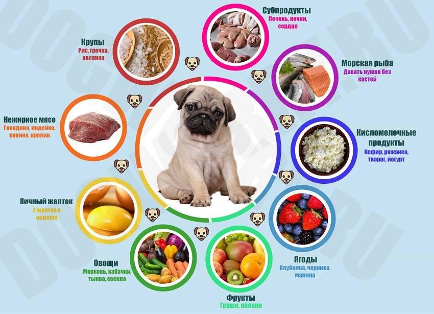 Какие овощи можно давать собакам?