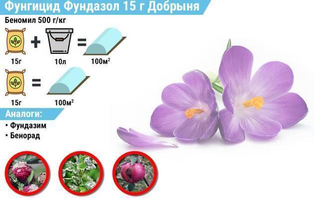 Как применять фундазол для орхидей: инструкция по применению, как обработать, разводить и чем заменить, фото и видео от специалистов