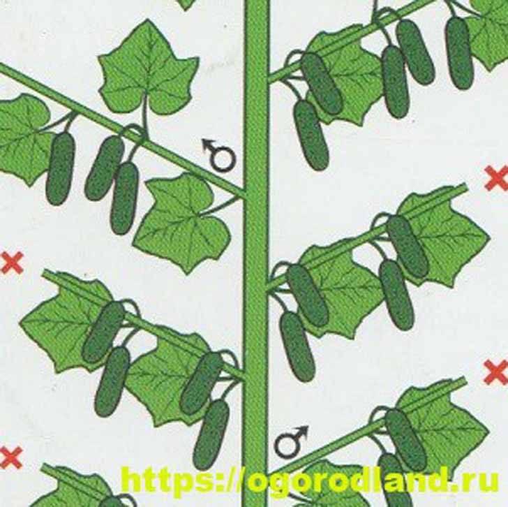 Огурцы аллигатор f1: описание гибрида, фото кустов и плодов, отзывы тех, кто выращивал