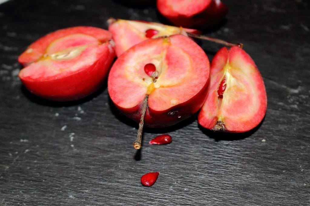 Сорт яблок розовый жемчуг, история сорта и его описание