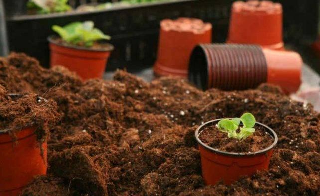 5 способов уменьшить кислотность почвы на участке