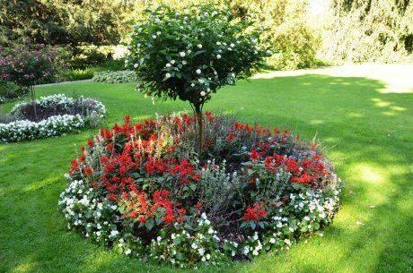 Простые варианты, какие цветы посадить под деревьями, чтобы приствольный круг плодовых деревьев выглядел на все 100!