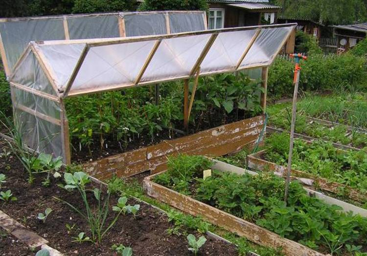 Баклажаны: выращивание и уход в открытом грунте и теплице, посадка на рассаду