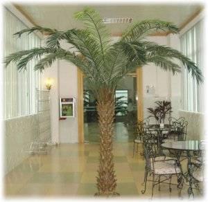 Финиковая пальма – экзотика в домашних условиях