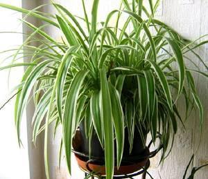 Неприхотливые комнатные растения: фото и названия, необходимый уход, особенности выращивания