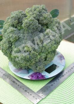 Сорта капусты брокколи: фото с названием