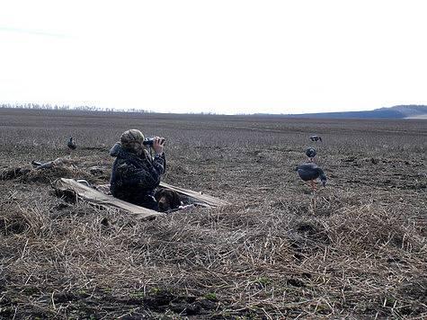 Охота на гуся осенью: тактика, оружие и снаряжение