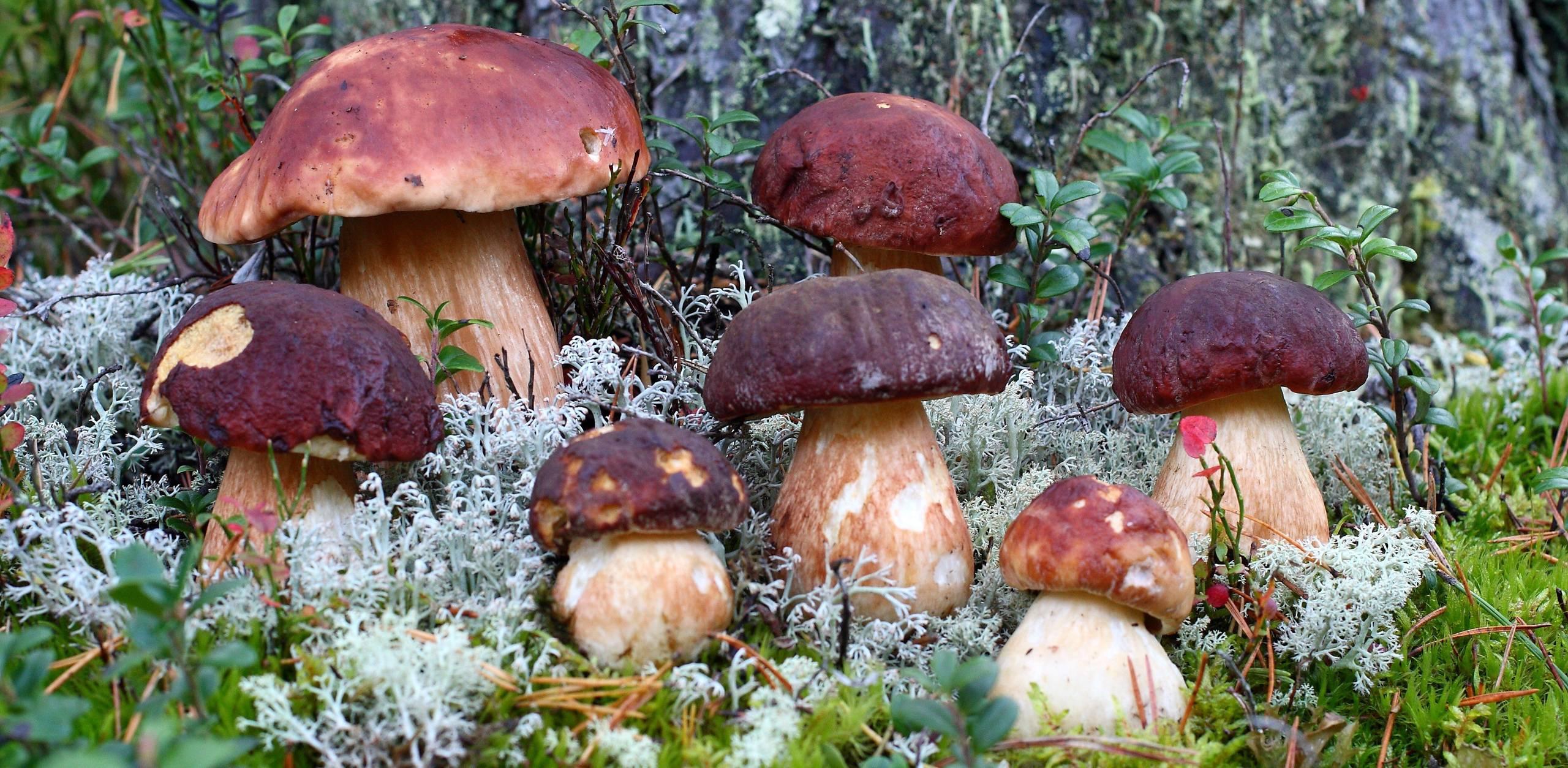 7 самых грибных мест свердловской области: как добраться, фото и полезные советы
