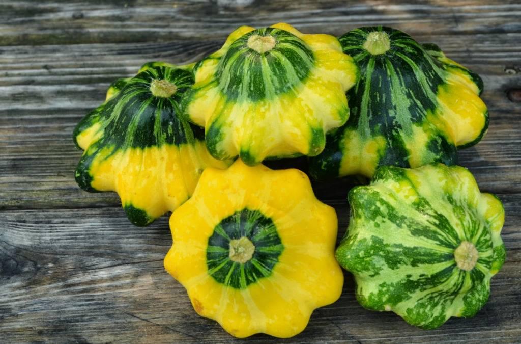 Патиссон: выращивание и уход в открытом грунте, болезни и вредители