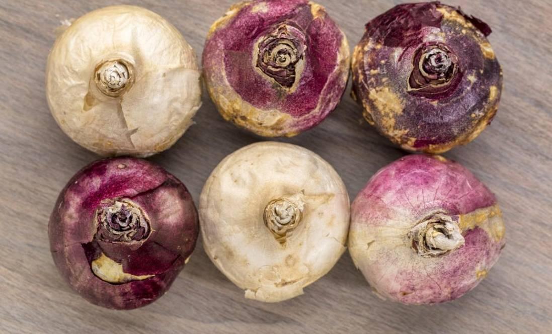 Когда выкапывать луковицы гиацинта после цветения