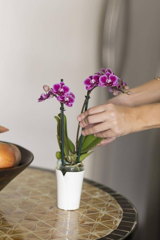 Можно ли спасти орхидею без корней или листьев и как это сделать, если нет ни того, ни другого?