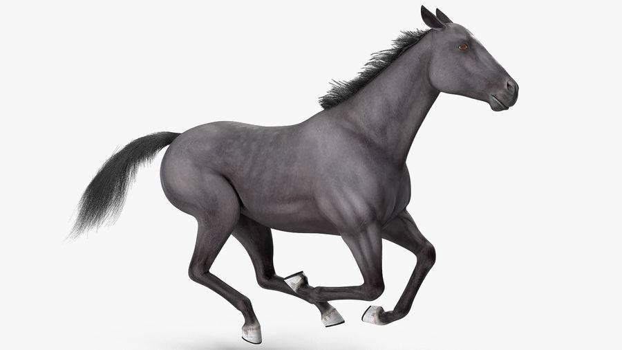 Аллюры лошадей и их характеристика | мои лошадки