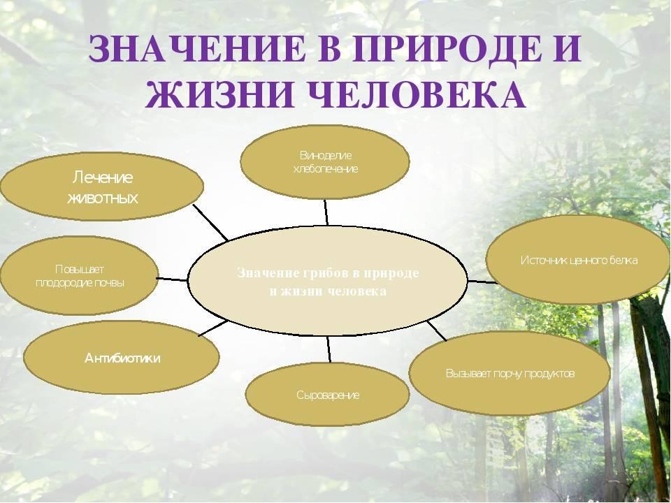 Царство грибов: строение, жизнедеятельность, размножение / справочник :: бингоскул