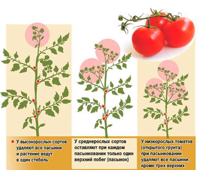 Как пасынковать помидоры в открытом грунте фото | вырасти сад!