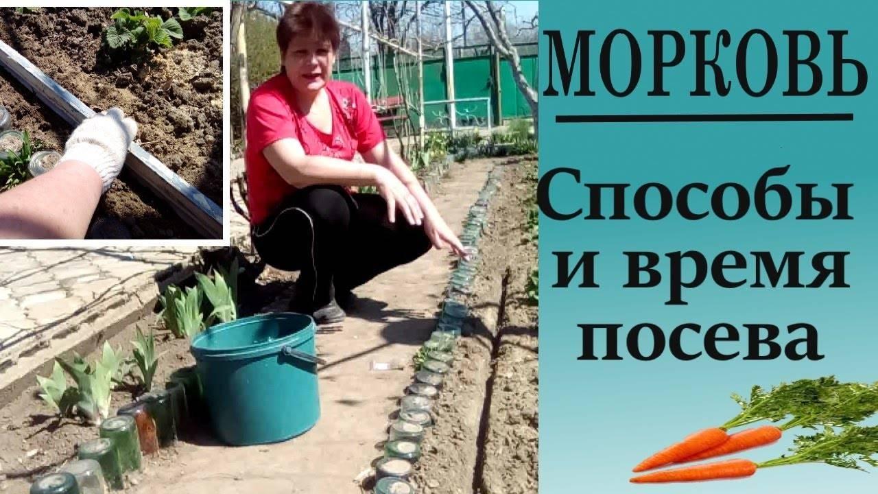 Посев моркови в открытый грунт весной: когда сеять, уход