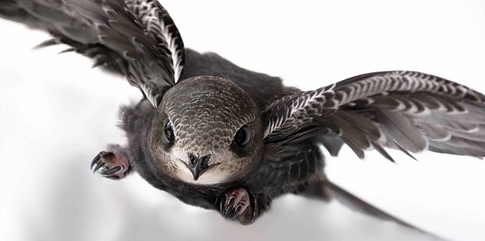Птица гусь: разновидности, описание, фото