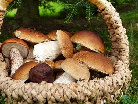 Как чистить грибы: универсальные рекомендации и конкретные инструкции +видео
