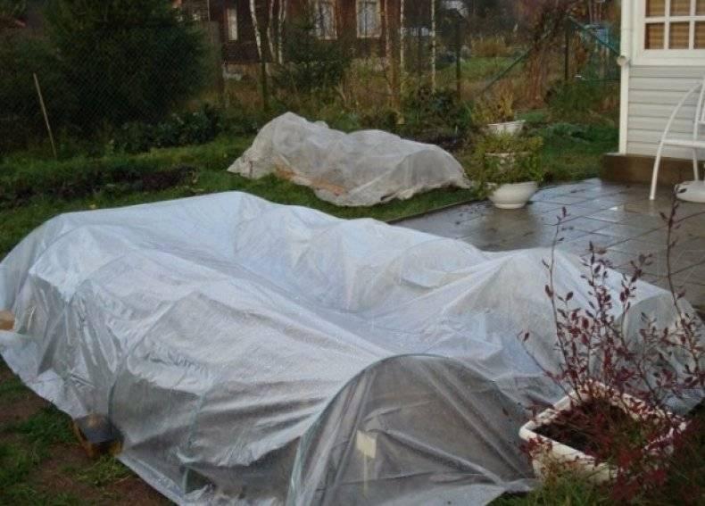 Укрывной материал на зиму для роз и других растений