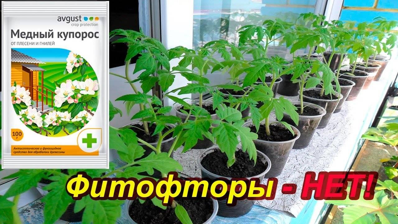 Обработка картофеля и томатов медным купоросом от фитофторы: эффективность, способы применения