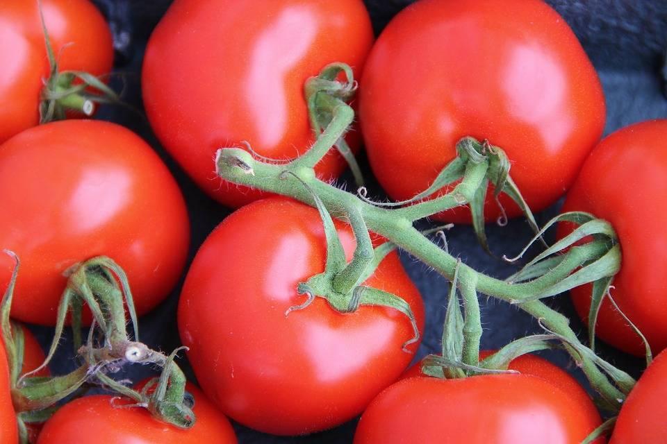 Посадка помидоров: по одному, по два, подготовка лунок, что класть в лунку для стимуляции роста, защиты от вредителей, какие удобрения добавлять