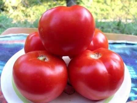 Томат «красным красно f1»: описание гибридного сорта, фото и отзывы