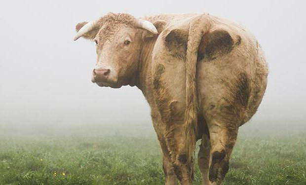 13942 (острый послеродовой эндометрит у коров) » студизба