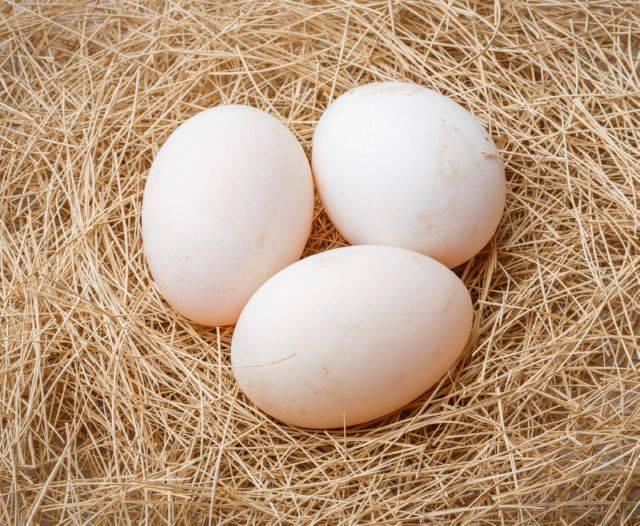 Можно ли использовать гусиные яйца в пищу: выбираем и готовим правильно