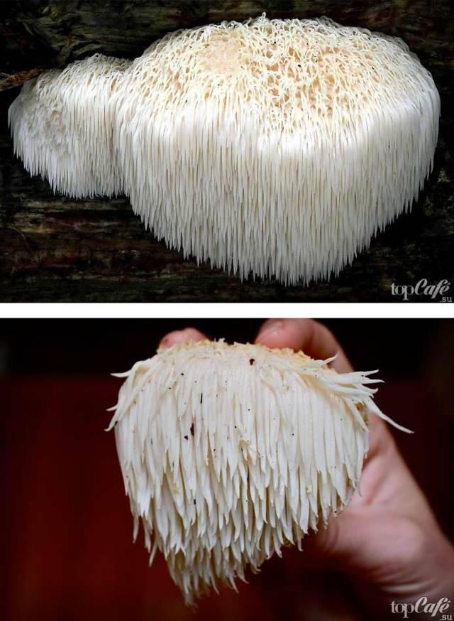 Самые удивительные факты о грибах: древние, живучие, опасные, галлюциногенные