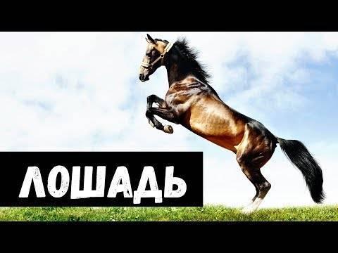 Сонник катаюсь на лошади. к чему снится катаюсь на лошади видеть во сне - сонник дома солнца
