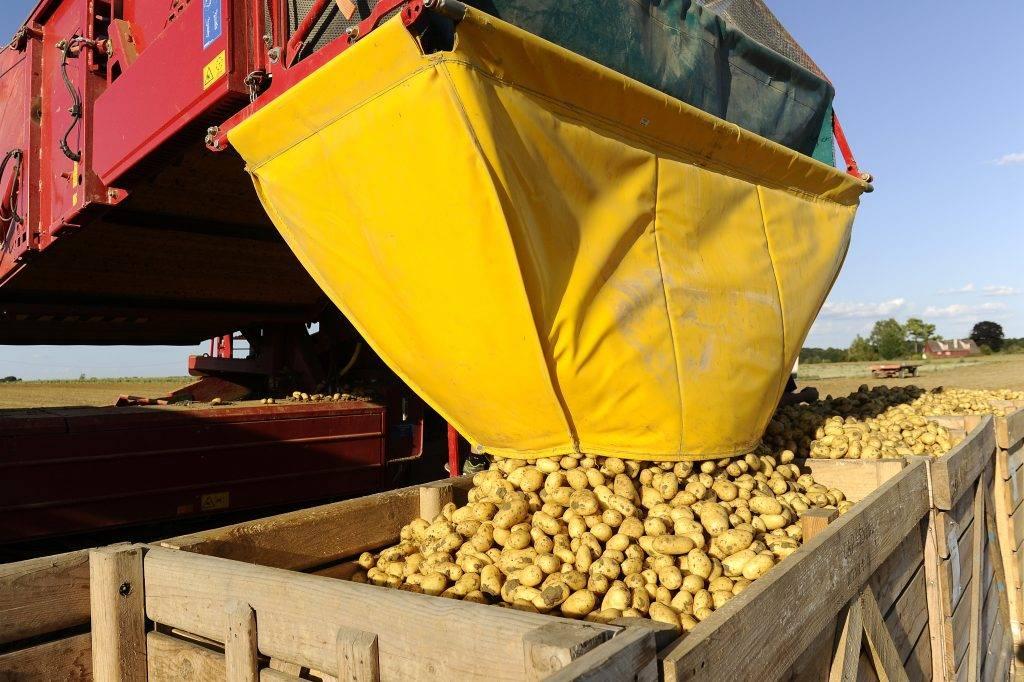 Картофелеуборочный комбайн: виды