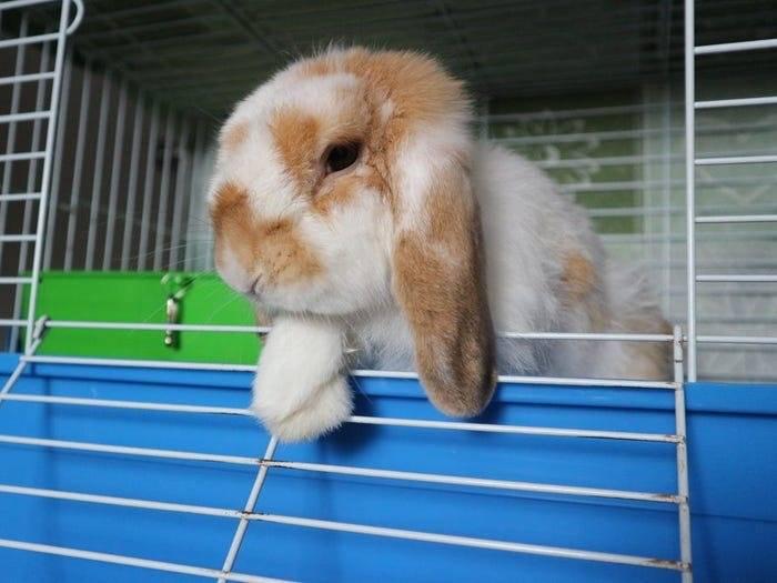 Витамины для кроликов, какие витамины давать кроликам (видео)
