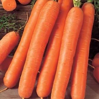 Что же такое морковь и какие тайны скрывает королева овощей