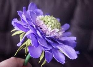 Скабиоза: посадка и уход в открытом грунте, фото цветущего растения