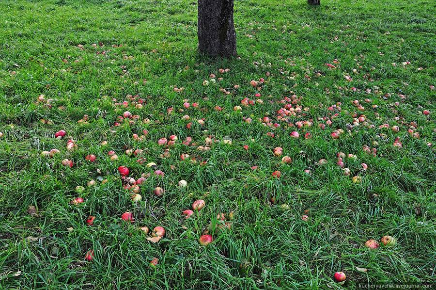 Пересадка плодовых деревьев осенью
