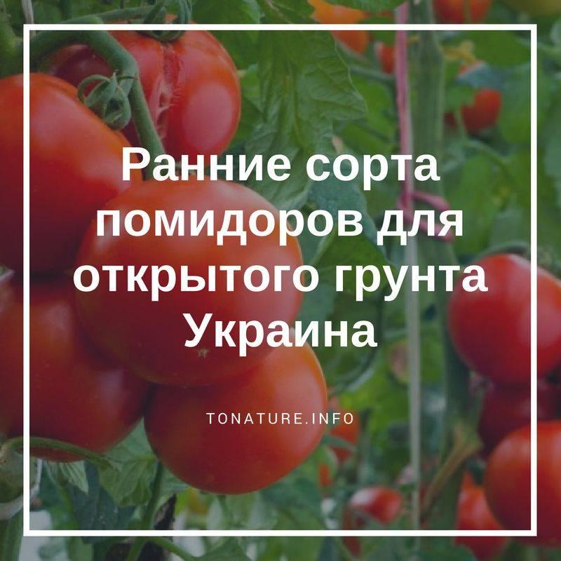 Сорта томатов для открытого грунта: описание, фото, отзывы