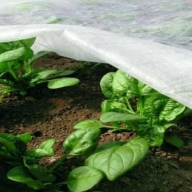 Что такое агроволокно и как его примененять на приусадебном участке