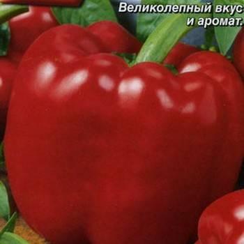 Лучшие сорта крупных толстостенных перцев для открытого грунта и теплиц