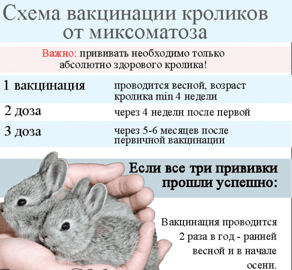 Прививки кроликам: какие и когда делать, в каком возрасте
