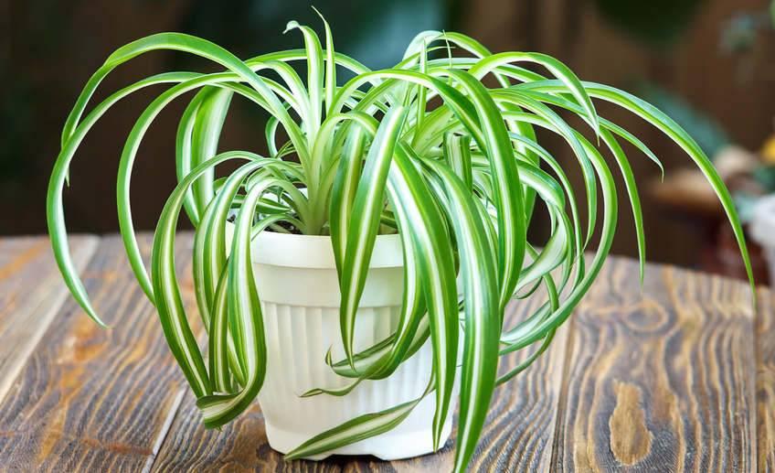Топ 15 лучших комнатных растений. фото и описание