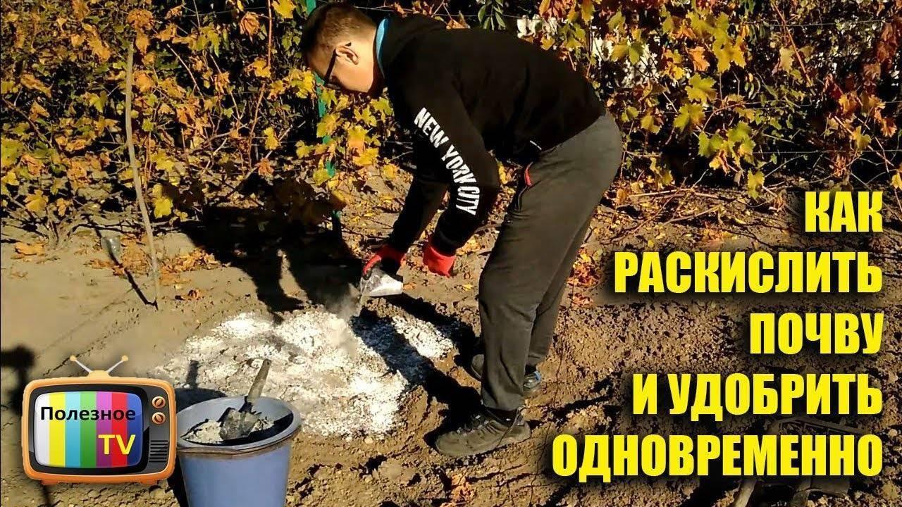 Глинистая почва на участке: что делать, чтобы улучшить ее? кислая или щелочная? как сделать ее плодородной и рыхлой удобрениями?